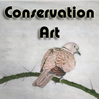 Abstract Art and Conservation