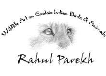 Wildlife Art of Rahul Parekh, India