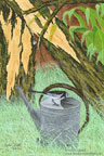 Human Intervention - White-browed Wagtail